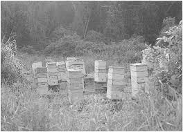 The History of Beekeeping in Hawaii