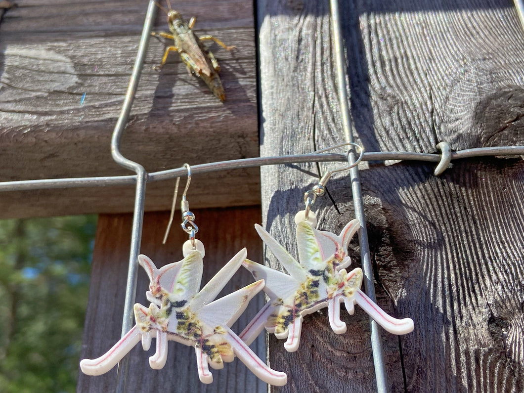 Praying Mantis Insect Earrings: Bug, Insects, Entomology