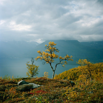 Troms Tree Norway