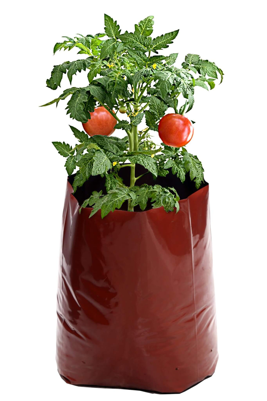 Rochfern Grow Bag,Extra Large,100% Virgin Polyethylene, (60 x 34 x 20Cms.) UV Treated Pack of 18