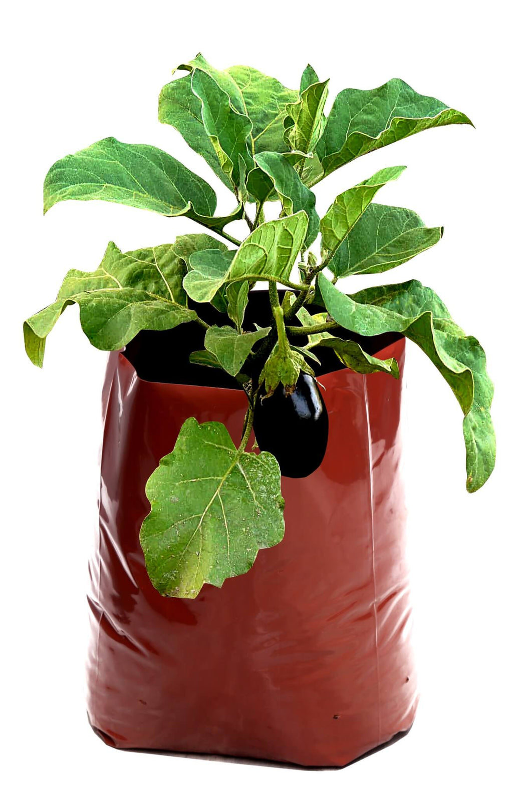 Rochfern Grow Bag (Pack of 6) Super Large for Vegetable Plants and Flowering Plants Size-60cms x 36cms X 24cms-Terracotta