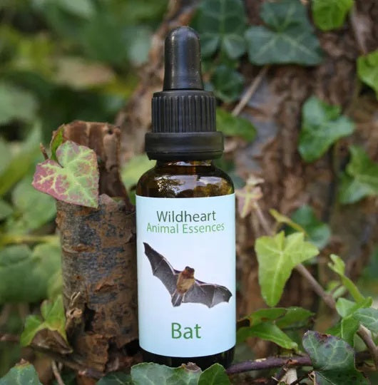 Wildheart Animal Essences - Bat