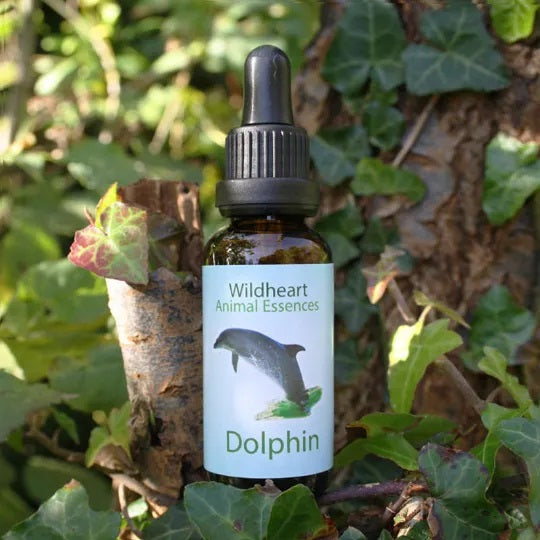 Wildheart Animal Essences - Dolphin