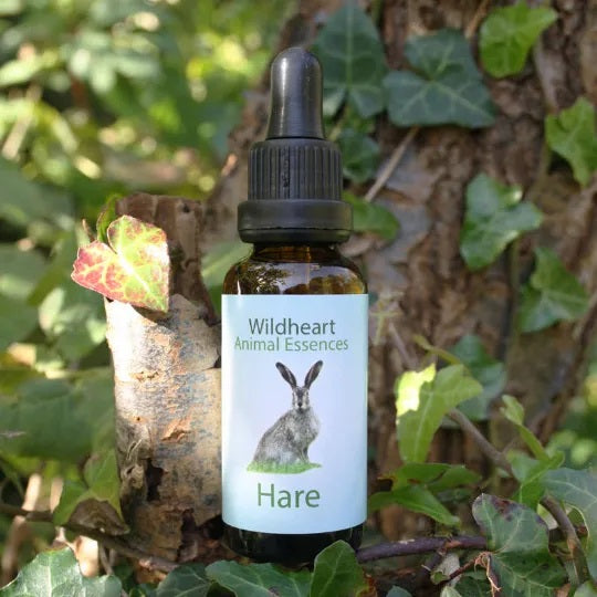 Wildheart Animal Essences - Hare
