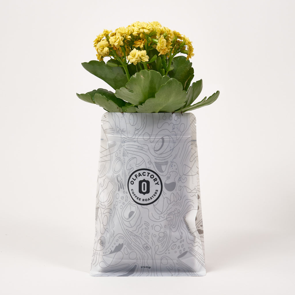 Plant in a coffee bag!