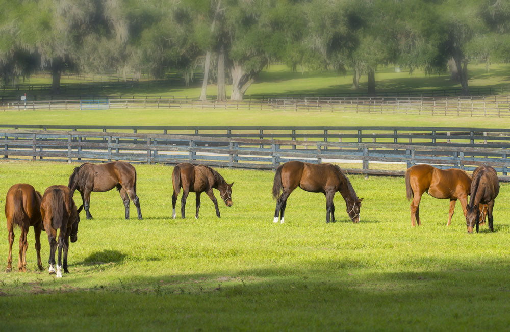What to feed to thoroughbred yearlings