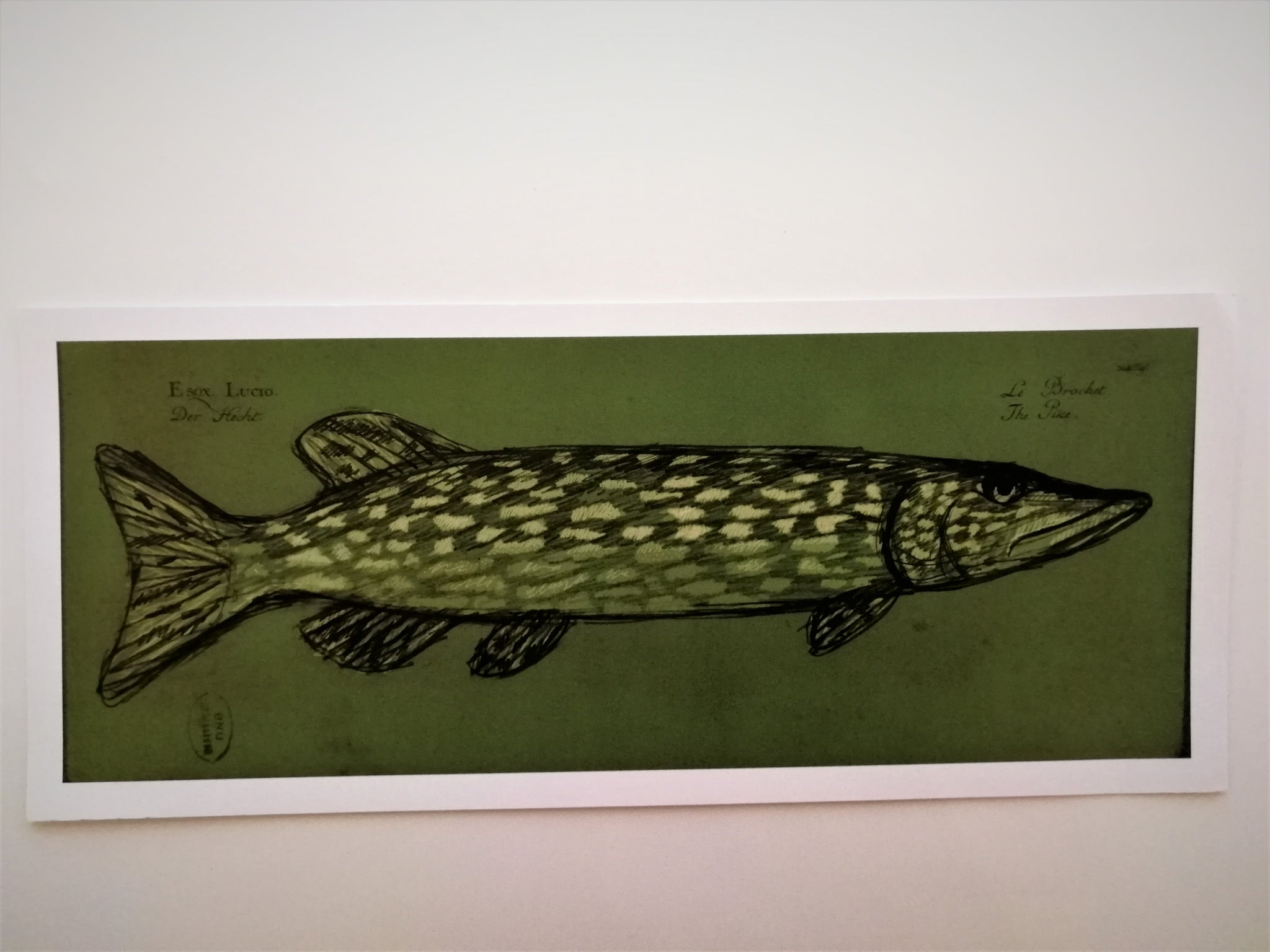 Martin Lee Fish print from drawing/painting ltd Ed