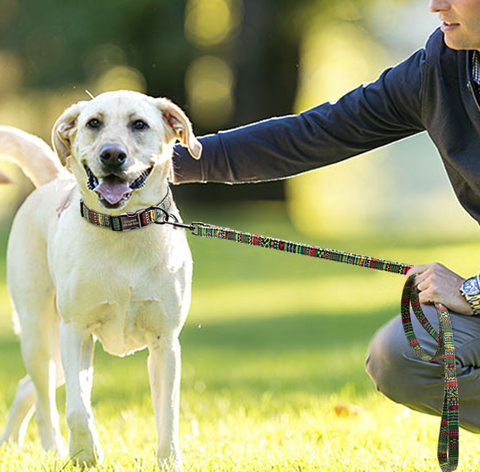 Training Dog Collars and Leashes