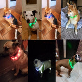 LED-Light USB-Rechargeable Collar
