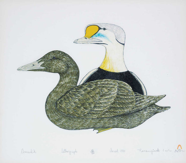 Kananginak Pootoogook artwork 'AMAULIK - EIDER DUCKS  1977  12/50' available at Canada House Gallery - Banff, Alberta