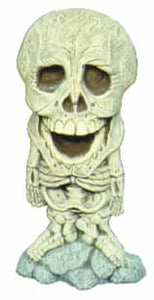 #1862 Big Head, Skeleton  7 3-4""