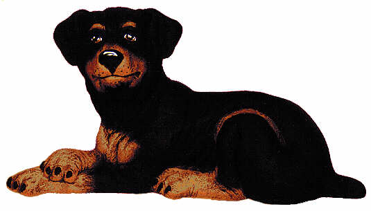 #2243 Large Dog - Rottweiler  8