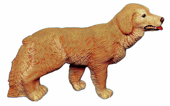 #2420 Large Dog - Golden Retriever  8