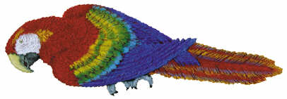 #2498 Macaw Parrot  16