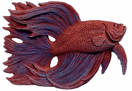 #2811 Siamese Fighting Fish Head Up  7
