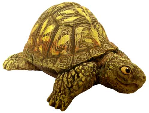 #3258 Box Turtle (Small), Head Out  3 3-4