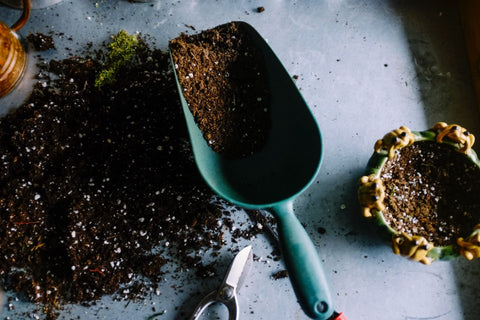 how to compost dog poop at home