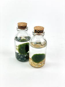Marimo Moss Ball 'Mini Milk Bottle'