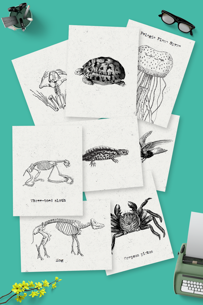 Vintage Animal bundle >> 40 pages