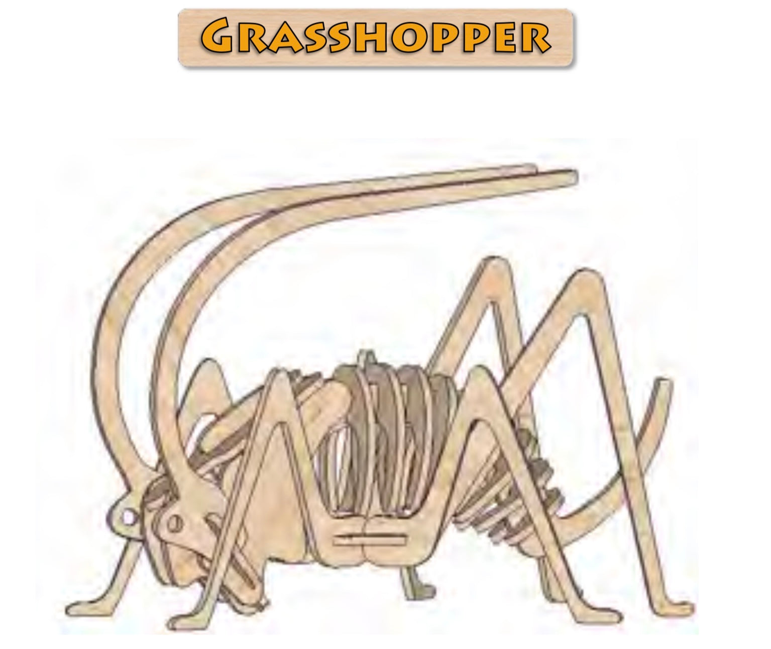 3D Puzzle, Insect Collection - Grasshopper