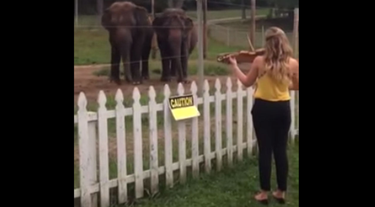 Animals Songs | Adorable Elephants' Reaction To Music Will Warm Your Heart! | Country Music Videos