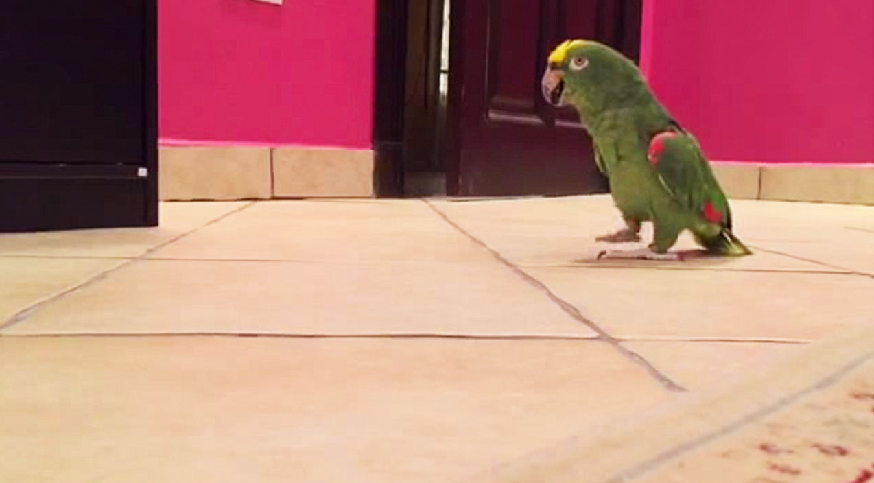 Animals Songs | Bird's Evil Laugh Will Make You Laugh So Hard | Country Music Videos