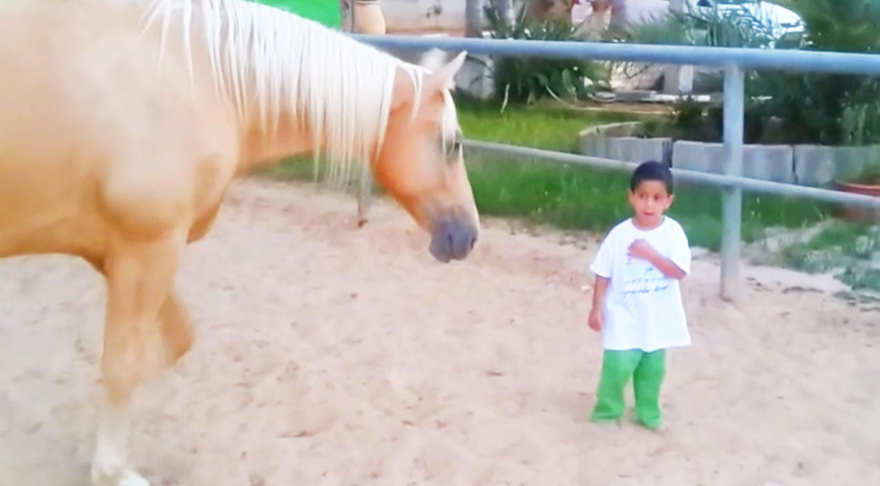 Horse Walks Up To Little Boy With Rare Disorder… Now Pay Close Attention To His Hand | Country Music Videos