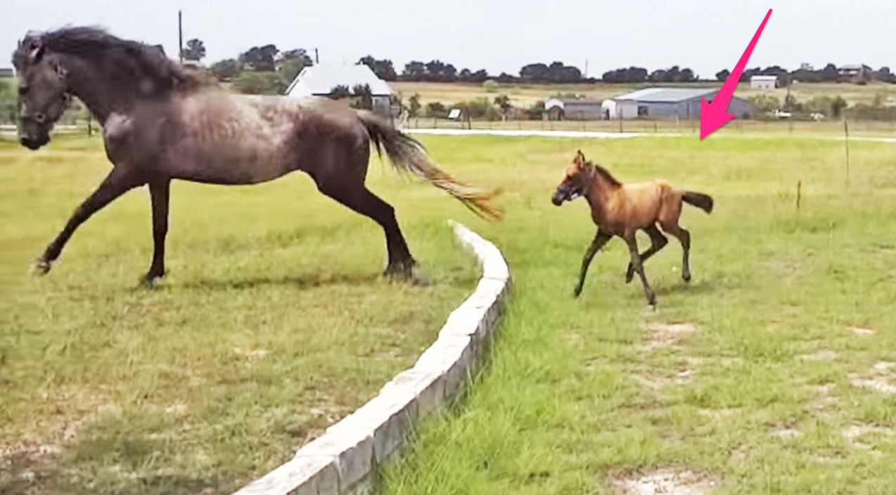 CUTENESS OVERLOAD: Baby Horse Gets A Fence-Jumping Lesson From Mom | Country Music Videos