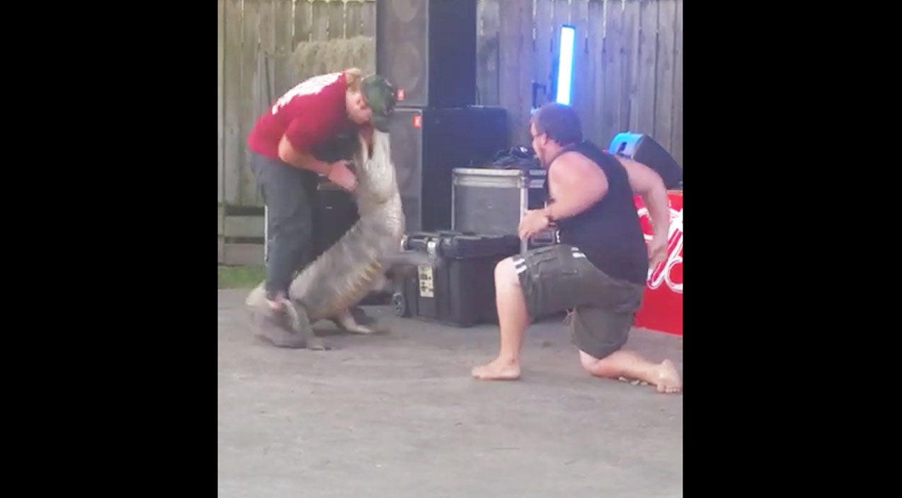 Texas Crawfish Festival Gets A BIG Scare (Angry Alligator) (WATCH) | Country Music Videos