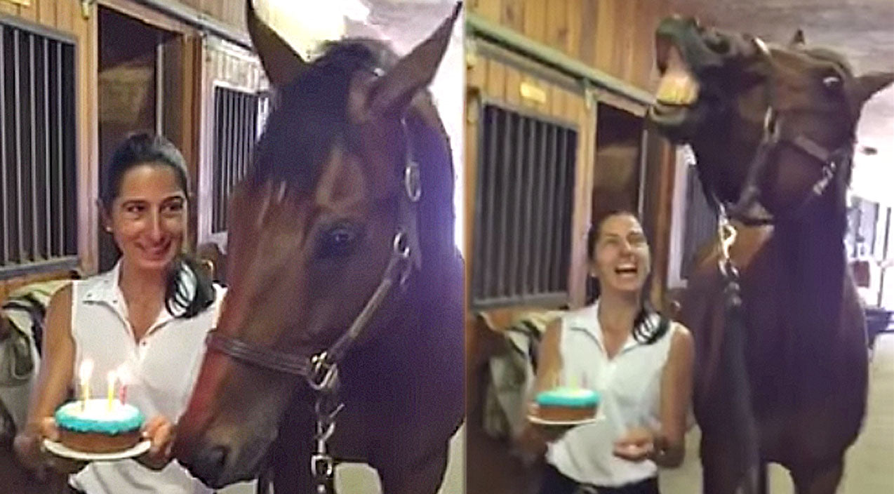 Animals Songs | Horse Blows Out Birthday Candles And It's Absolutely Priceless! | Country Music Videos