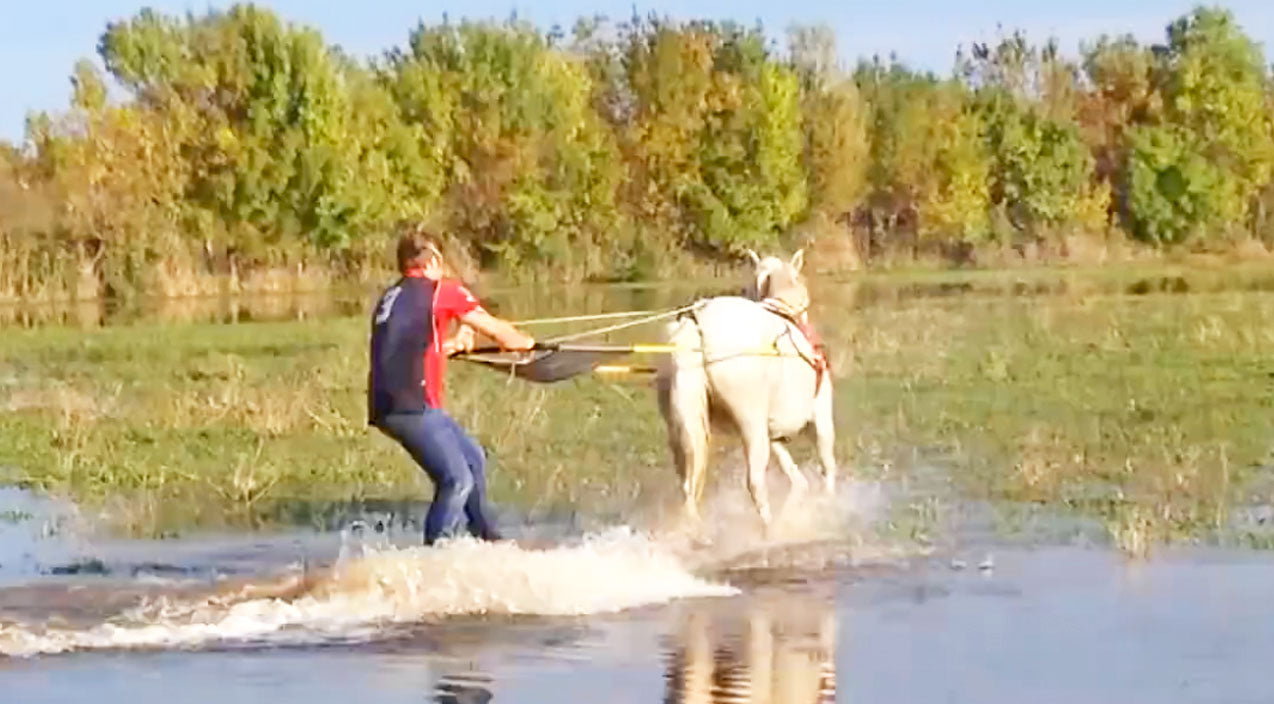 Animals Songs | You Won't Believe What Happens When This Horse Is Given A Wakeboard | Country Music Videos