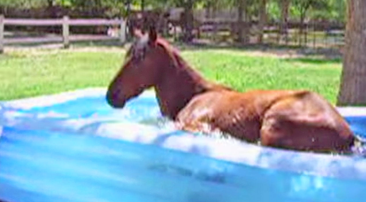 Animals Songs | This Very Big Horse Hysterically Makes A Splash In Kiddie Pool | Country Music Videos