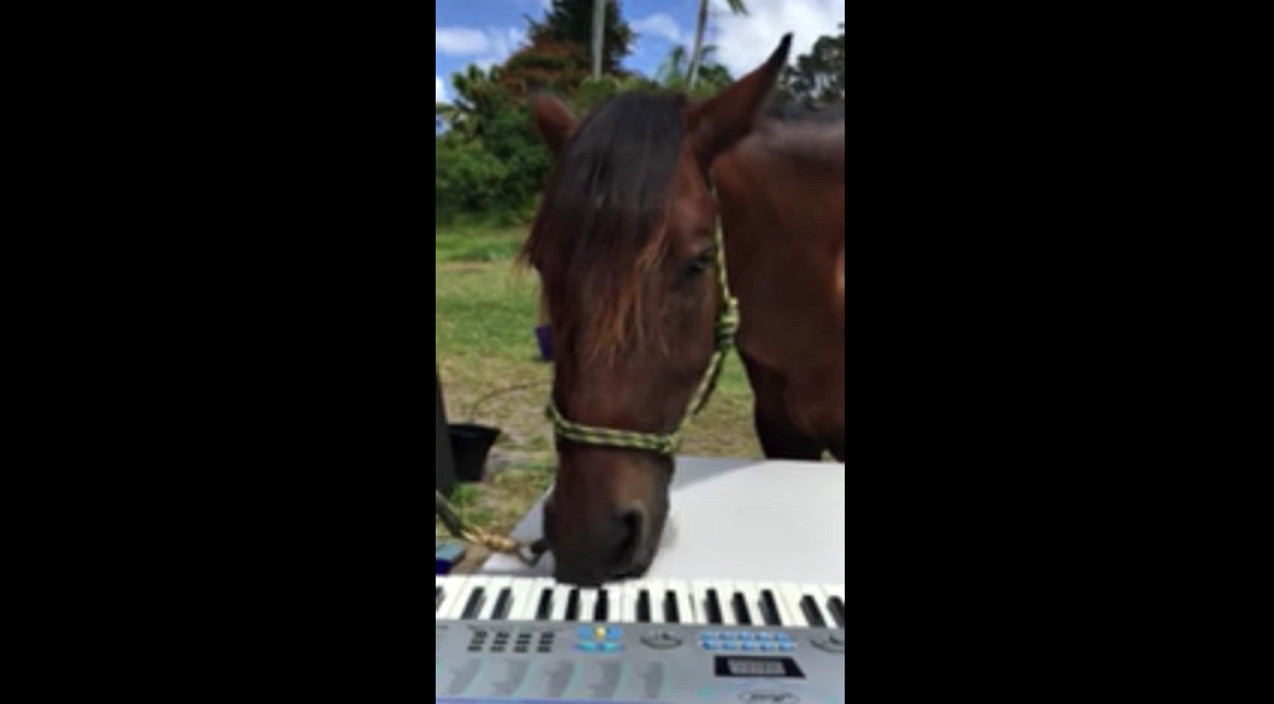 Murphy The Rescue Horse Becomes Internet Star With Impressive Piano Skills | Country Music Videos
