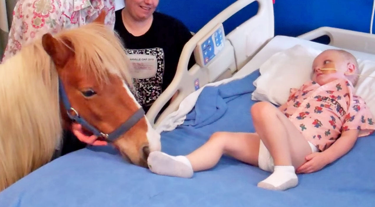 Animals Songs   Miniature Pony Brings Joy To Children's Hospital   Country Music Videos