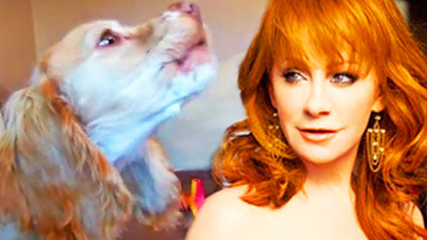 Reba mcentire Songs | Cute Dog's Funny Reaction To Reba McEntire's