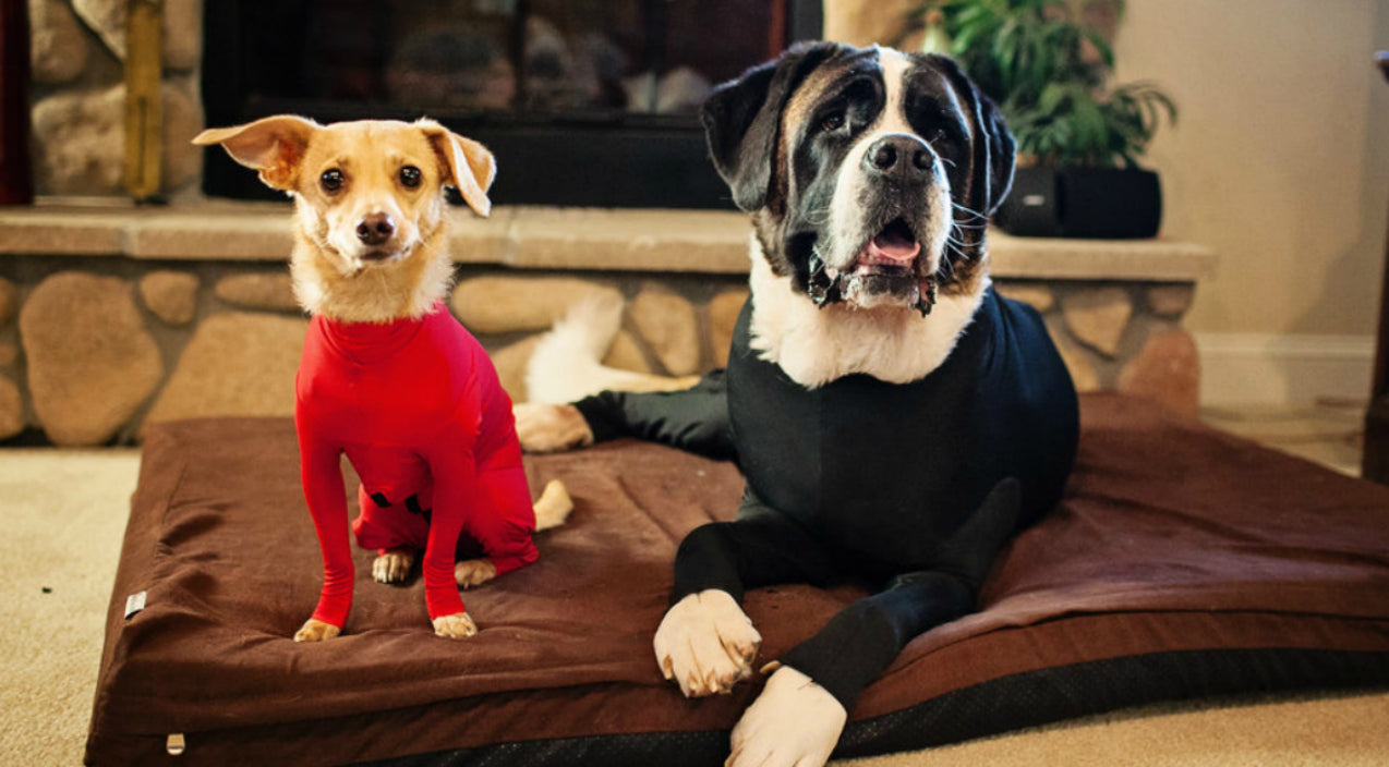 Frustrated Dog Owner Invents Doggy Leotards And We Can't Stop Laughing | Country Music Videos