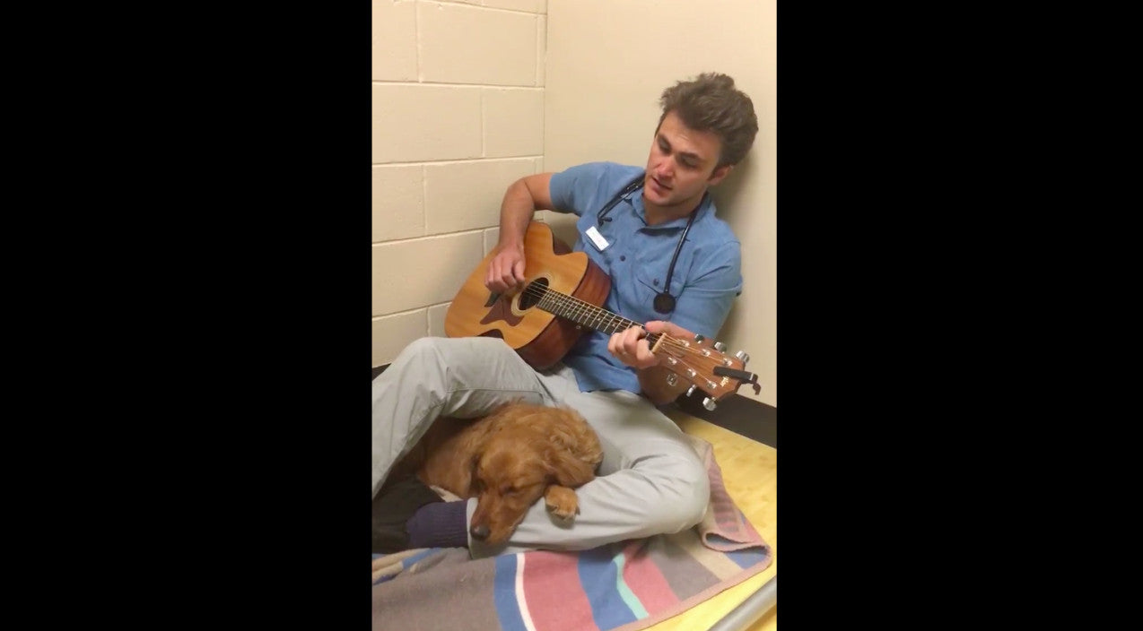 Elvis presley Songs | Veterinarian Sings Elvis Tune To Calm Scared Dog Before Surgery | Country Music Videos