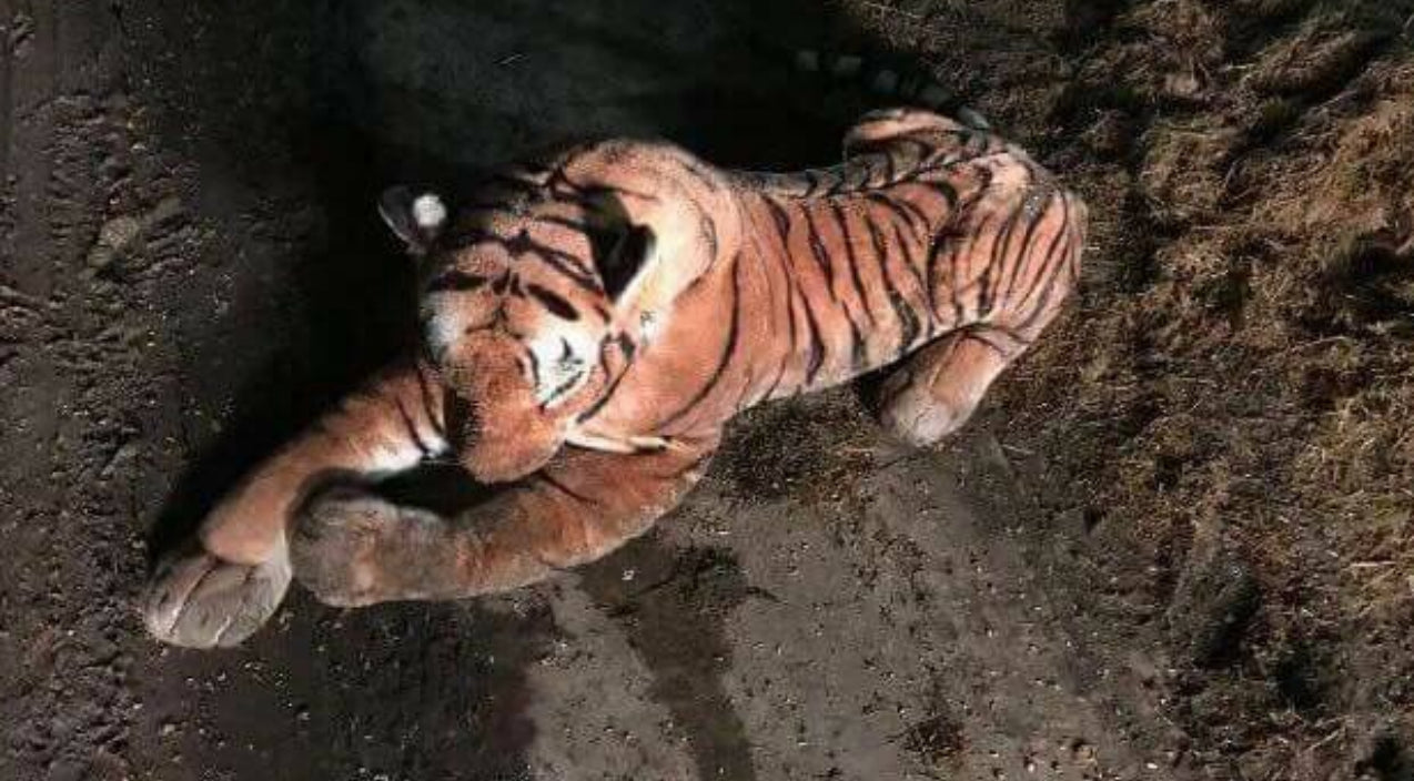 Toy Tiger In Barn Sends Farmer Into A Frenzy And Causes Hour-Long Police Standoff | Country Music Videos