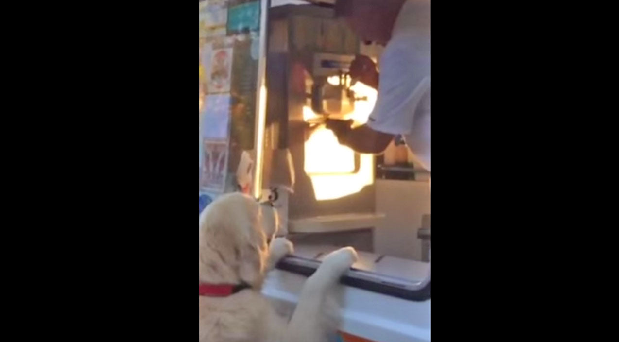 You Thought Your Dog Was Well Behaved? This Pup Aims To Prove You Wrong! | Country Music Videos