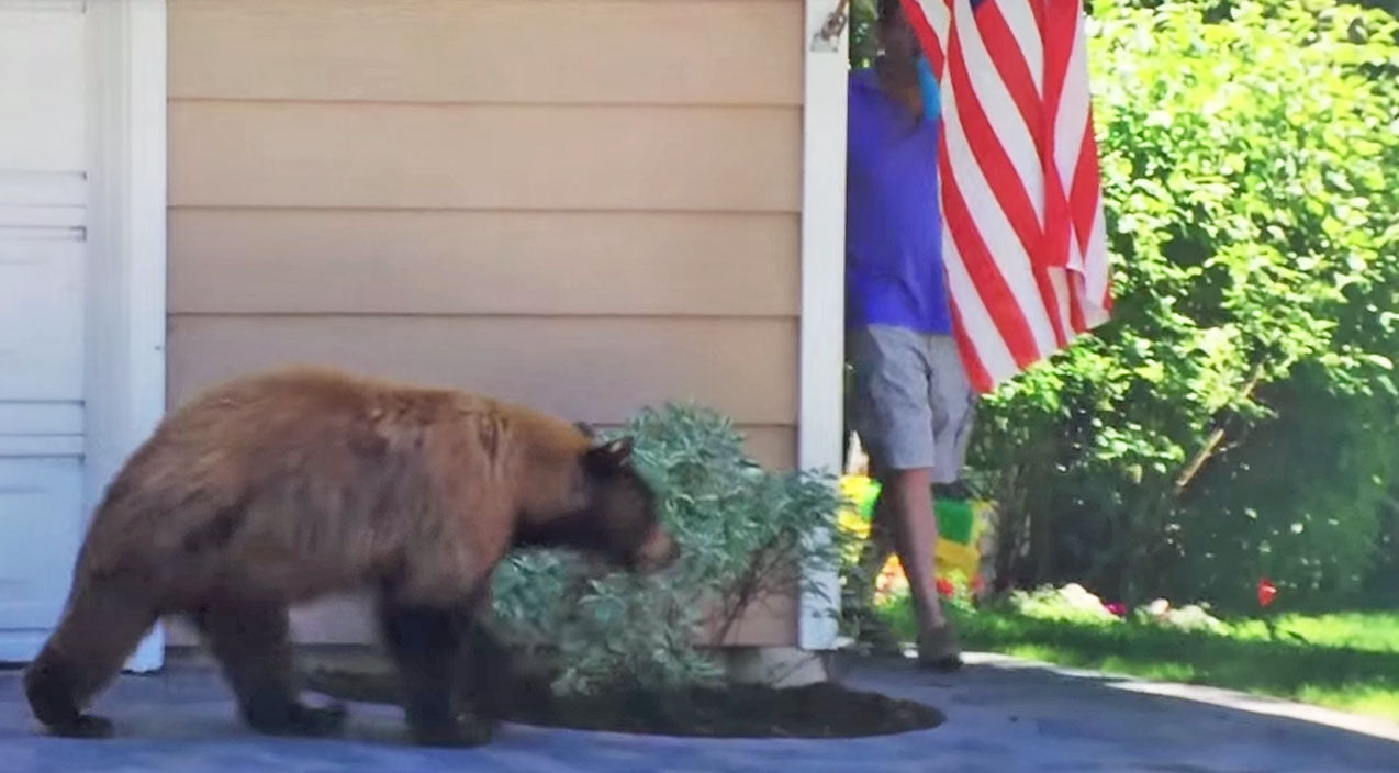 Funny Songs | Bear and Man Scare Each Other And It's Hysterical! | Country Music Videos