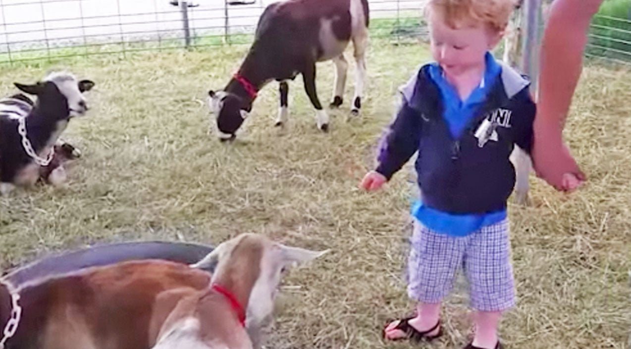 You Won't Believe This Little Boy's Reaction When He Pets A Goat For The First Time | Country Music Videos