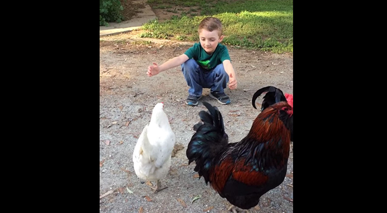 You'll Never Believe What Happens When A Little Boy Tries To Hug His Pet Chicken | Country Music Videos