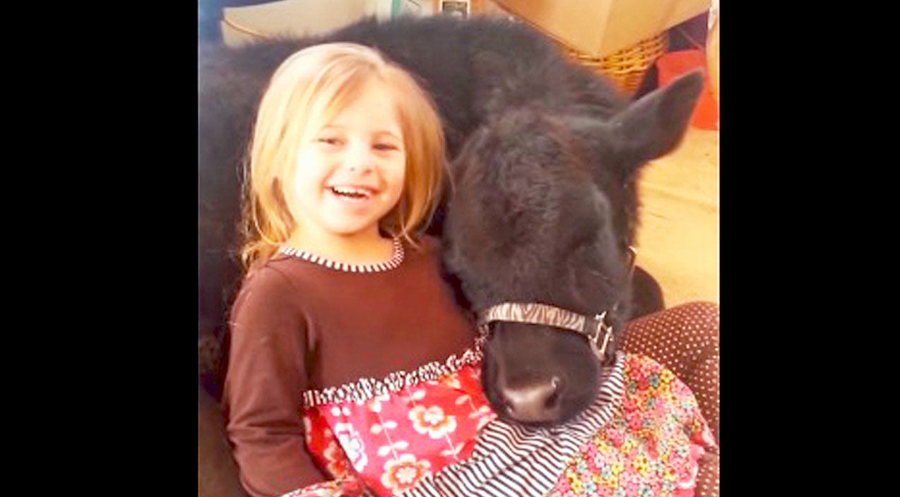 Little Girl Sneaks Pet Cow In The House. Her Mom's Reaction? Priceless! | Country Music Videos
