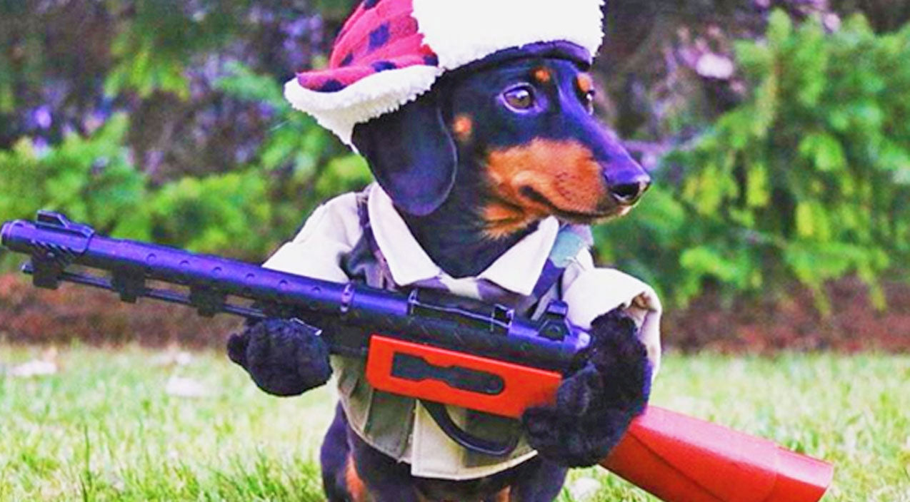 Animals Songs | TOO CUTE: This Little Dog Is Ready For Hunting Season | Country Music Videos