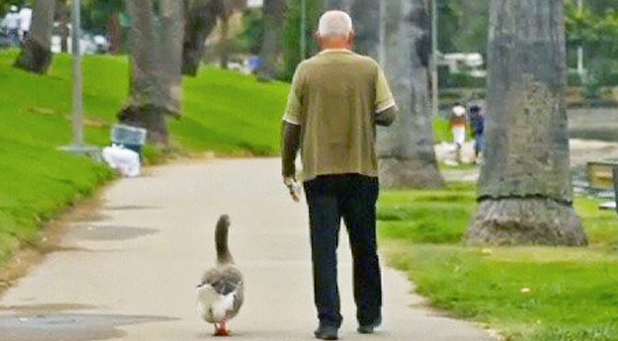 This Man's Unlikely Friendship With A Goose Will Melt Your Heart   Country Music Videos
