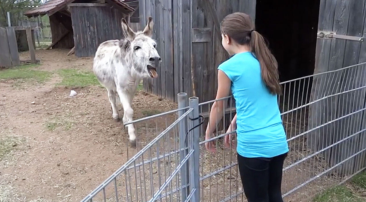 Viral content Songs | Donkey Spots His Owner Across The Pen And Does The Unthinkable | Country Music Videos