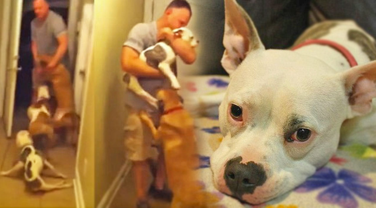 Adorable Disabled Dog Welcomes Home Airman After Deployment   Country Music Videos
