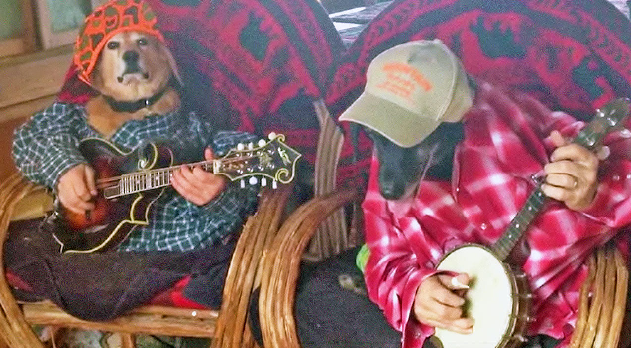 Funny pets Songs | Old Dogs Battle In Bad To The Bone Dueling Banjos | Country Music Videos