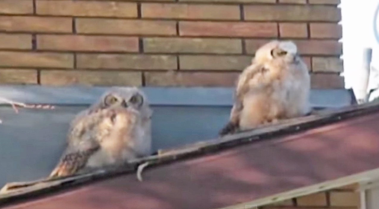 Classic country Songs | Two Owls Sitting On A Roof...What Happens Next Will Shock You (Funny!) (WATCH) | Country Music Videos