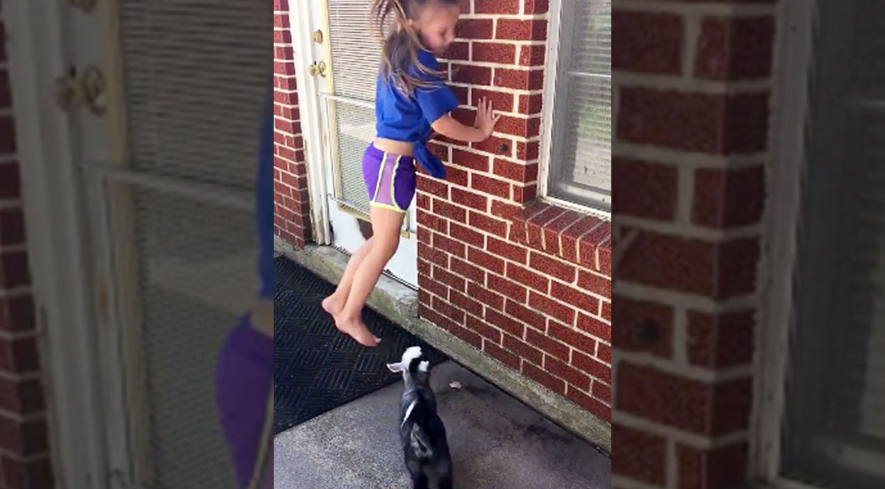 Viral content Songs | Little Girl Jumping Off Brick Wall Prompts Baby Goat To Do The Adorably Unexpected | Country Music Videos